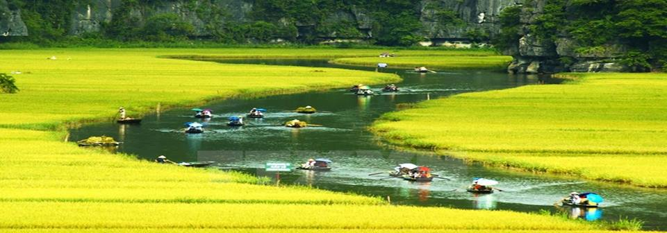 Tam Coc in Rice Season