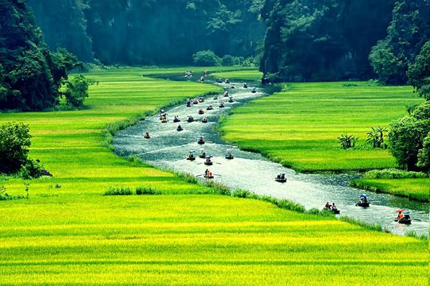 Incredible Tam Coc with golden rice fields