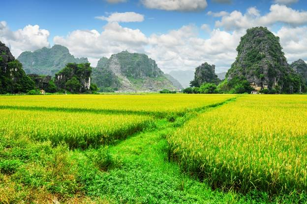 Rice Field at Mua Cave Area