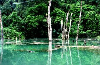 Cuc Phuong National Park Tour